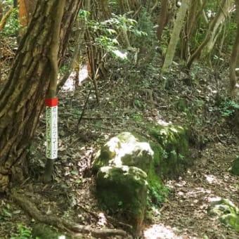 鞍岳登山道は緑陰の中