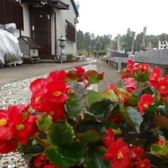 夏季 花の植え替え