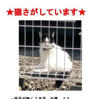 ★3本足の猫さがしています★