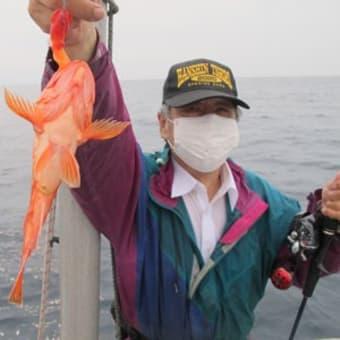 6/15(火)マイカ型良く一升瓶クラスバッチリ^^根魚もアコウにウッカリカサゴと(*^^*)ノ