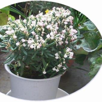 3月の花:2006~まとめ