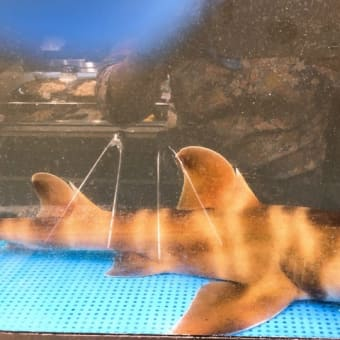 ネコサメがやってきた 小田原早川漁村漁師の浜焼あぶりや | ららぽーと湘南平塚