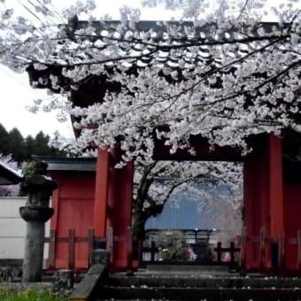 佐久山御殿山公園と実相院の桜 2020/3