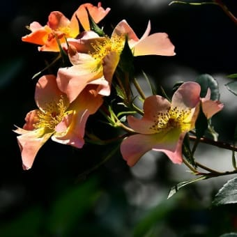 季節の花に・・・
