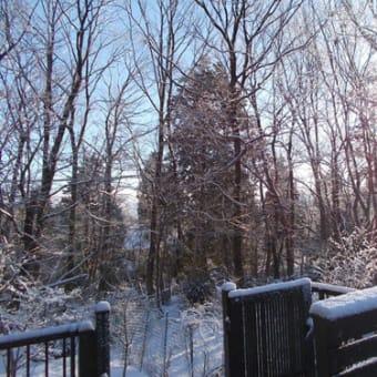 我が家からの雪景色