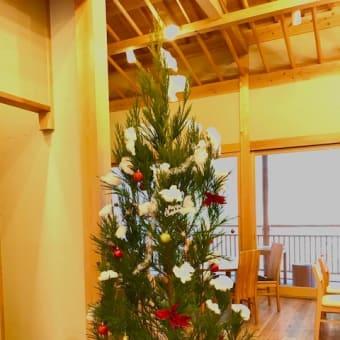 北山杉のクリスマスツリー 今年も販売しています!