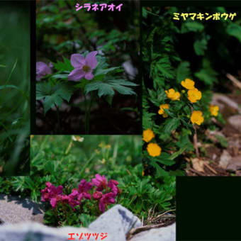 植物エネルギー ~74 話 夢にまで見た暑寒別岳フィルムデータ  ~