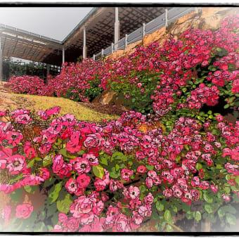 花フェスタ記念公園での写真をアートフィルターで! Part2