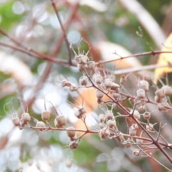 ウツギ    もれふるひかりの下に      東京都江東区恩賜の森