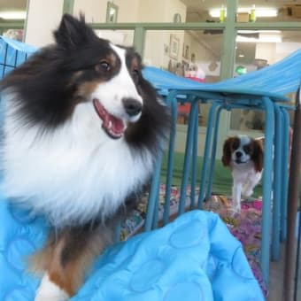 6月28日(日)の【ALOHA塾】は、 未病ケアの《Dogscan》  犬のしつけ教室@アロハドギー