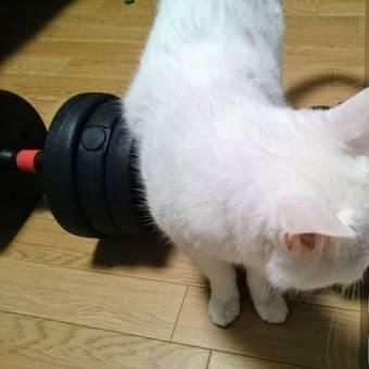 #筋トレ と #白猫