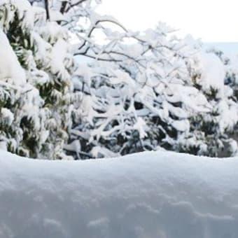 やっぱり大雪になりました。