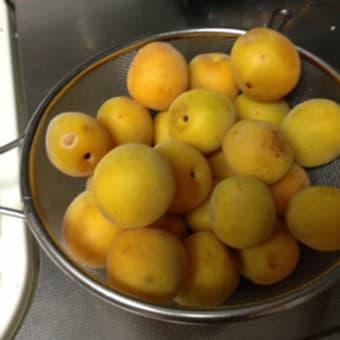 完熟梅のヨーグルトムース