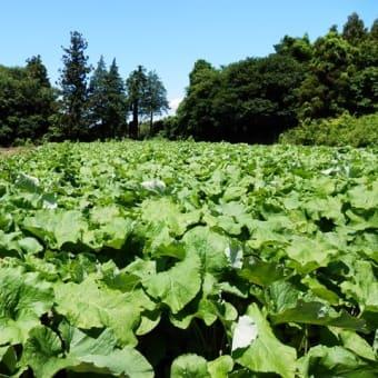 梅雨の晴れ間にポタリングで青い空!白い雲で季節の花!季節の野菜!