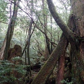 屋久島サイクリングのついでに屋久杉を見に行きました【屋久島ヤクスギランドガイドツアー】