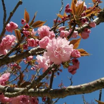 ♪春のドライブ♬