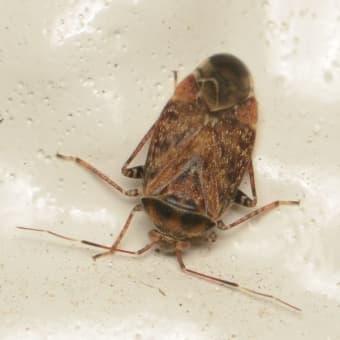 廊下のむし探検 ハエ、甲虫、カメムシ