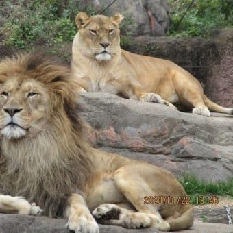 天王寺動物園に行く 1月22日水曜