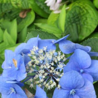 静かに綺麗!7月の花たち!