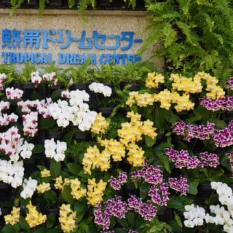 沖縄 熱帯ドリームセンターの花たち