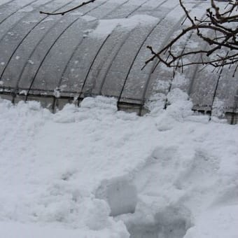 残り物でパエリア♪お正月は雪降りでした~