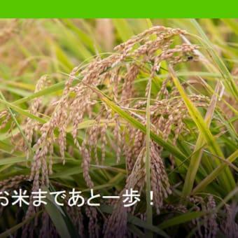 グリーンピース、「お米にムダにネオニコチノイド系農薬などの農薬を使わせる政策をやめてください」署名呼びかけ