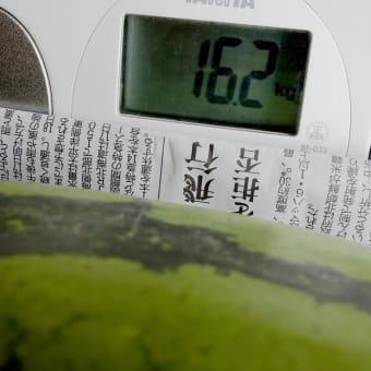 オニヤンマ・雲井沼