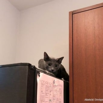 猫がやんちゃすぎる件