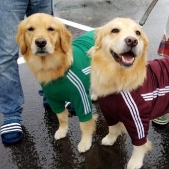 ナナちゃん&ルナちゃん♪に会えた♡と・・土佐犬ラーメン♪