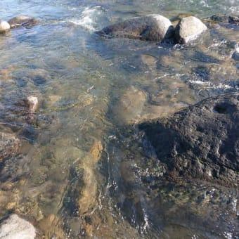 狩野川鮎、まるで冬の川