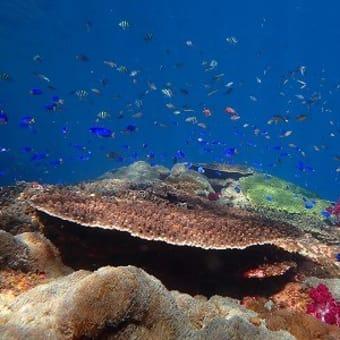 10月3日(日)今日も晴天!夏日和の愛南を2本ガッツリ潜ってきました。昨日とは違うポイントで、水中世界は、新しい世界になっちゃった