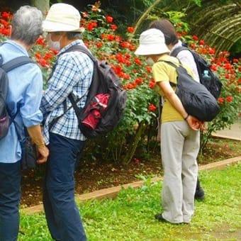 (市川)大町植物園から万葉植物園へ