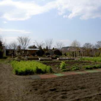 静かな時間     2007年3月17日 見沼田んぼ福祉農園