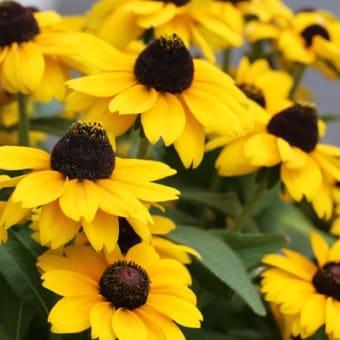 この花の名前は