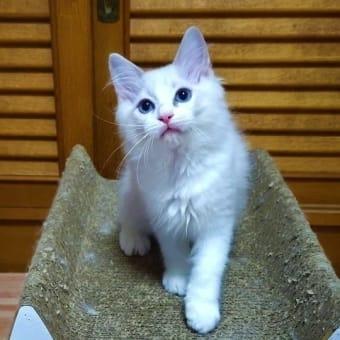 ユメナちゃんの子猫☆彡