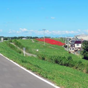 八島ニュータウンのヒガンバナはまだ見頃です