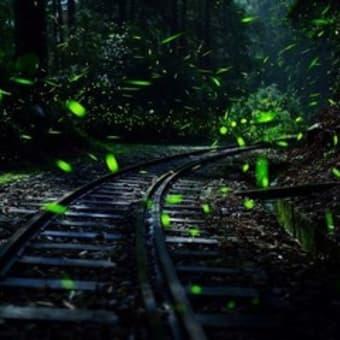 幻想的に舞うホタルの光 阿里山で見ごろ/台湾