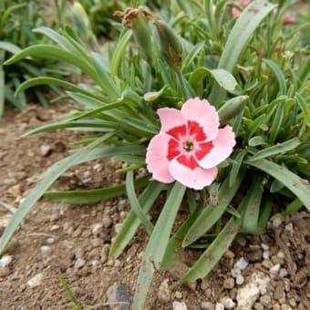 アンデルセン公園の花 その5