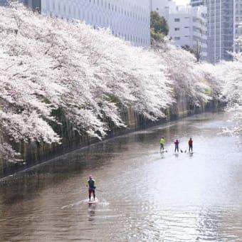 桜も盛を過ぎて惜春なのに冬?