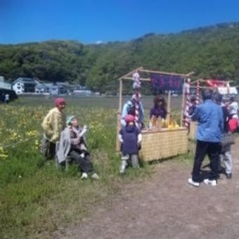 静岡県松崎町 『田んぼをつかった花畑』 3月上旬~5月5日