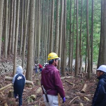 大変な林業