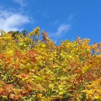 『小さい 秋みーつけた』