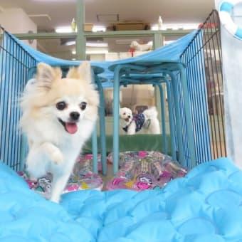 明日の【ALOHA塾】は《チョークアートぷちレッスン》  犬のしつけ教室@アロハドギー
