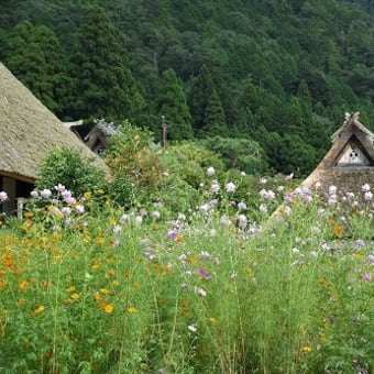 美山の秋 そばの花