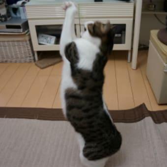 外を知らないネコ