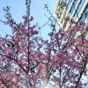 春がだんだんと
