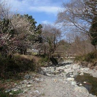 「春の風布川」事前調査