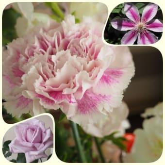 バラそしてベランダの花