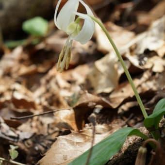 小塩山で見かけた花
