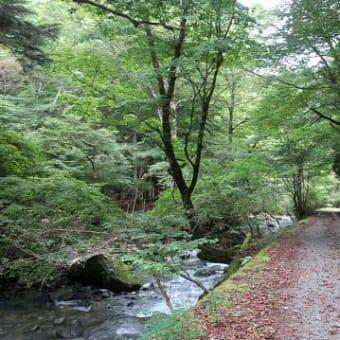 赤西ゲート~三室山~竹呂山